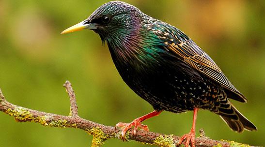 How to identify British Garden Bird