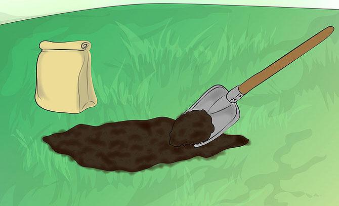 How to grow Chard