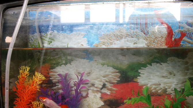 How to do a safe water change in a freshwater aquarium