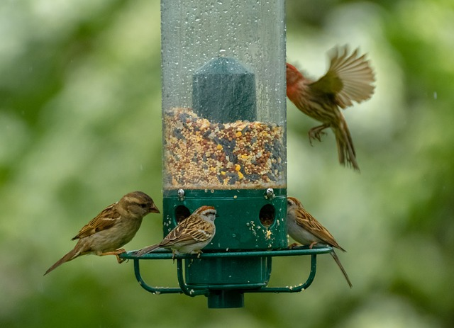 birds-in-garden
