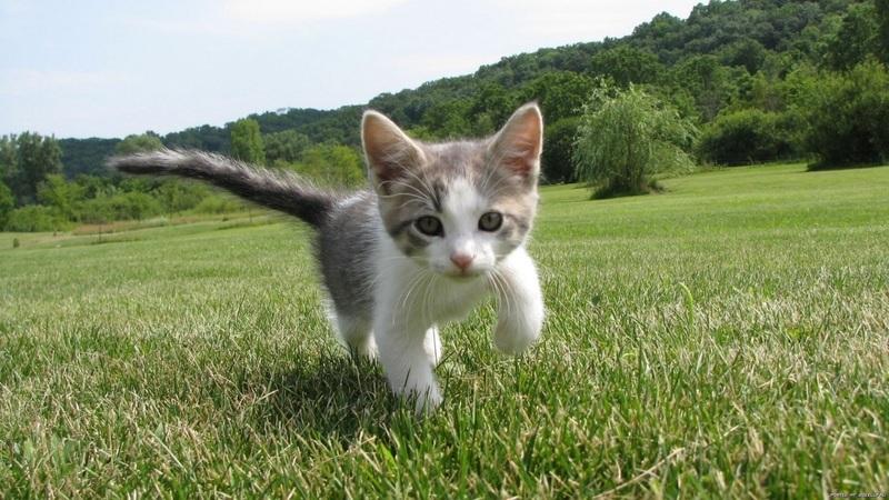 pet cat exercise