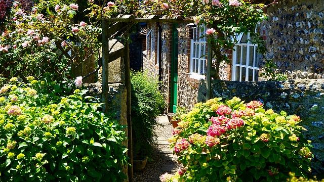 garden backyard plants