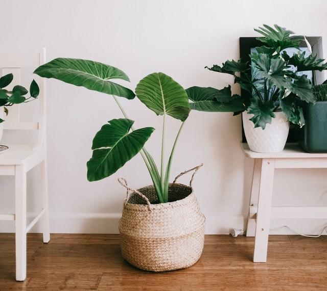 kitchen renovation plants