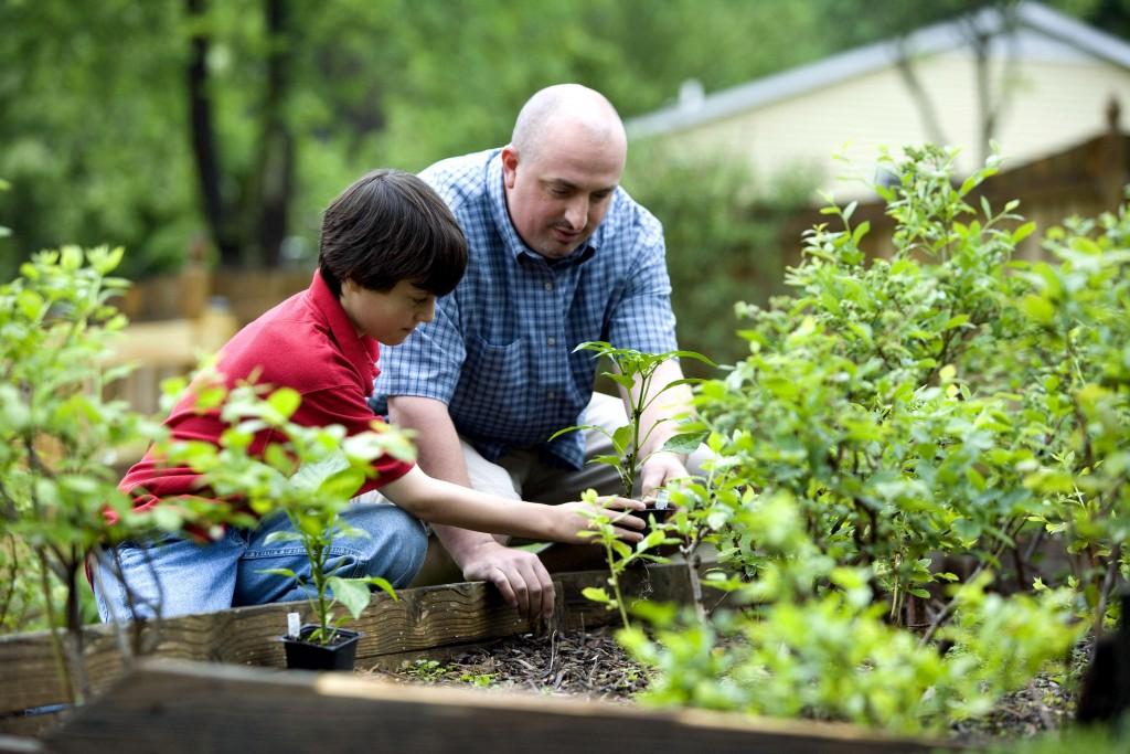 homely garden